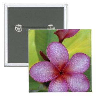 Flower, Plumeria sp.), South Pacific, Niue Pinback Button