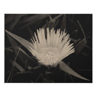 Flower Portrait in Black and White Panel Wall Art