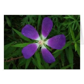 Flower Posing as a Purple Star / Estrella morada Card