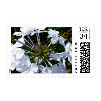Flower Postage Stamp
