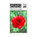 flower postage stamps