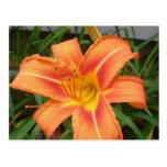 flower postcard