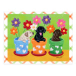 Flower Pot Labrador Puppies Post Cards