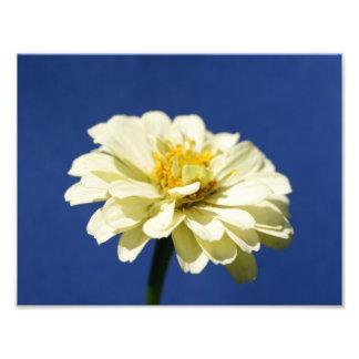 Flower Pow 11 x 8 5 Photographic Print