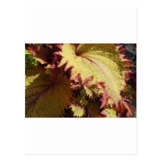 Flower Power.JPG Postcard