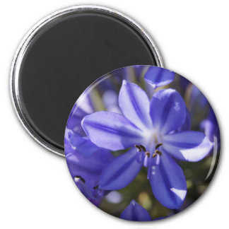 Flower Power & Nature Magnet - Blue Agapanthus
