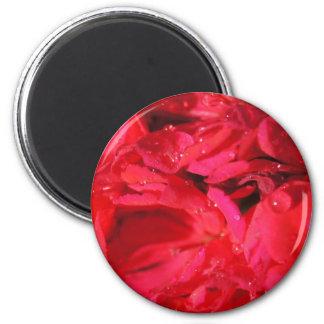 Flower Power & Nature Magnet - Pink Rain Rose