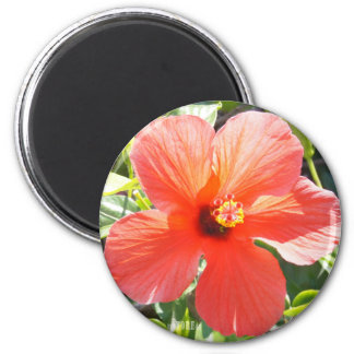 Flower Power & Nature Magnet - Red Hibiscus