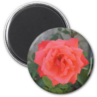 Flower Power & Nature Magnet - Rose Blossoming