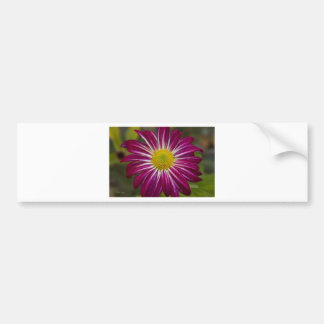 Flower power púrpura del aster pegatina de parachoque