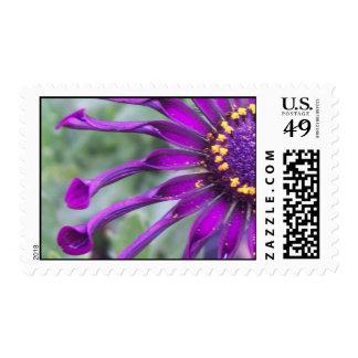 Flower Power Spider Purple Stamp