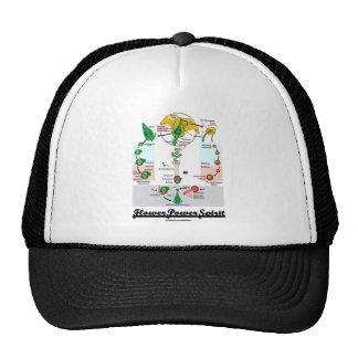 Flower Power Spirit (Angiosperm Life Cycle) Hat