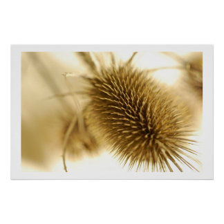 Flower Prickly Print Poster
