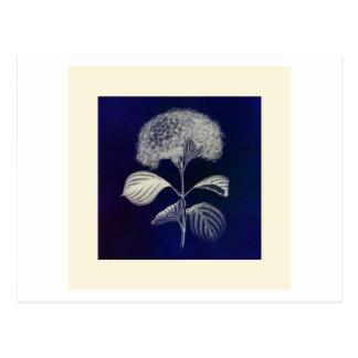 Flower print on blue background postcard