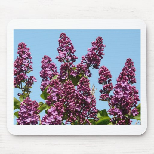 flower,purple lilac mouse pad