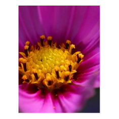 Flower Purple Postcard