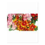 Flower Rainbow Post Card