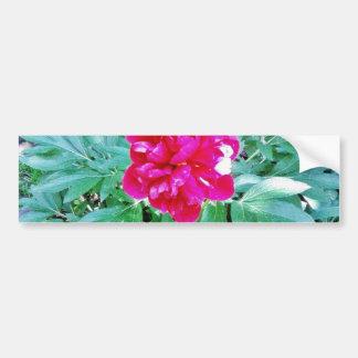 Flower Red Bozur Bumper Stickers