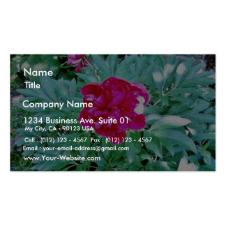 Flower Red Bozur Double-Sided Standard Business Cards (Pack Of 100)