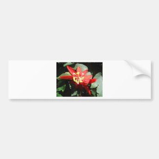 flower,red passion flower bumper sticker