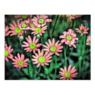 Flower revitalize postcard