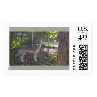 Flower Running Wolf in the sun Postage