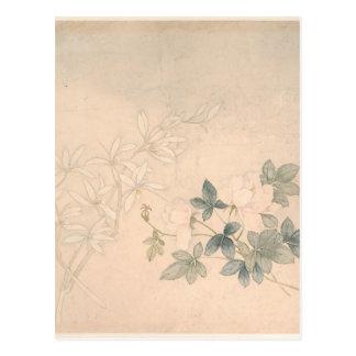 Flower Study 2 - Yun Bing (Chinese) Postcard