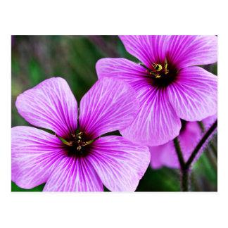 Flower Subject Postcard