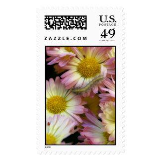 Flower Surfing Postage