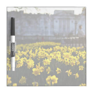 Flower Themed, Blooming Yellow Daffodils Bathed In Dry Erase Board