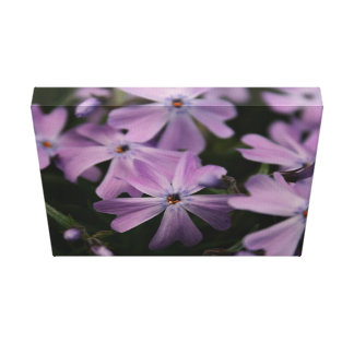 Flower Themed, Pretty, Violet Flowers Sporting Hea Canvas Print