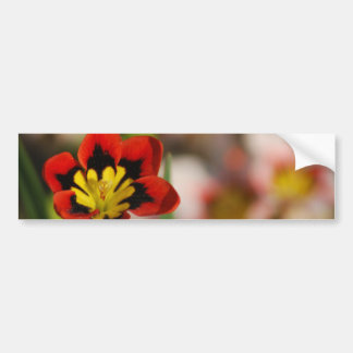 Flower to be cherished bumper sticker
