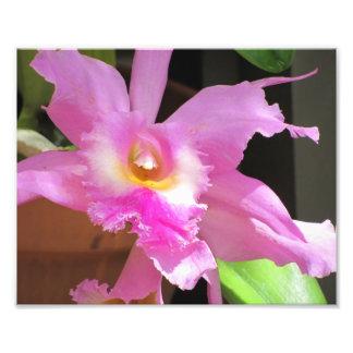 Flower, Unknown 1 - Photo Print
