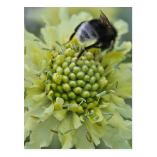Flower with Bumble Bee Post Card