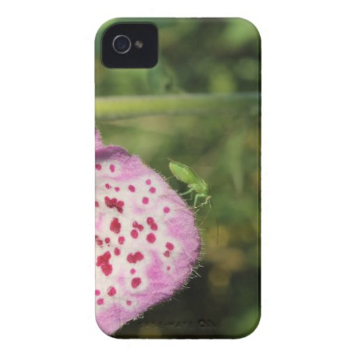 Flower with Small Green Insect. iPhone 4 Covers