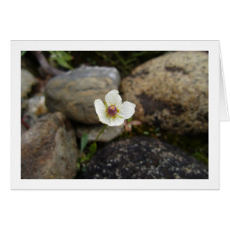 Flower with Soft Rock Background Card