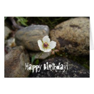 Flower with Soft Rock Background; Happy Birthday Card