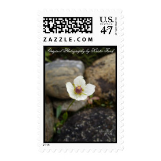 Flower with Soft Rock Background; Mailing Products Postage