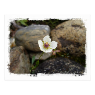 Flower with Soft Rock Background Postcard