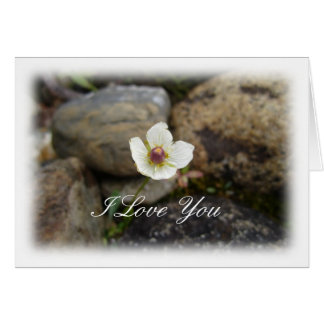 Flower with Soft Rock Background; Sweet Nothings Card