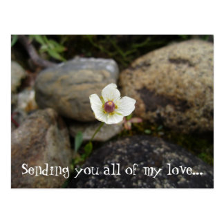 Flower with Soft Rock Background; Sweet Nothings Postcard