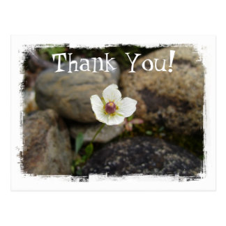 Flower with Soft Rock Background; Thank You Postcard