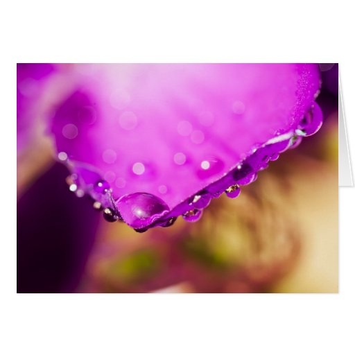 Flower with Water Drop Cards