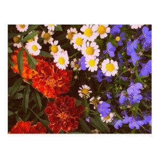 Flowerbed card