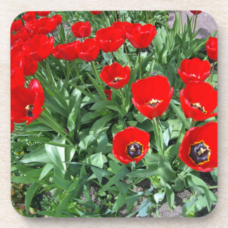 Flowerbed with red tulips drink coaster