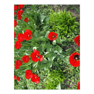 Flowerbed with red tulips letterhead