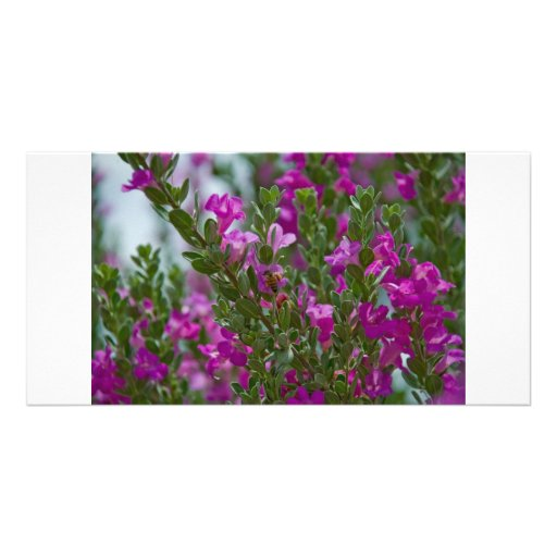flowerbush photo card