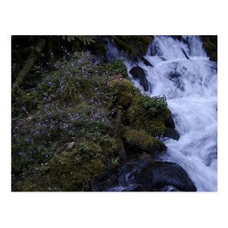 Flowered Falls Postcard