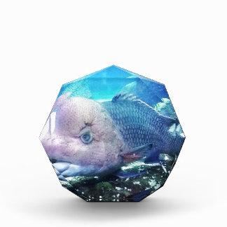Flowerhorn Cichlid Fish Acrylic Award