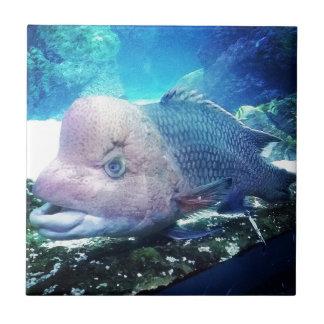Flowerhorn Cichlid Fish Ceramic Tile
